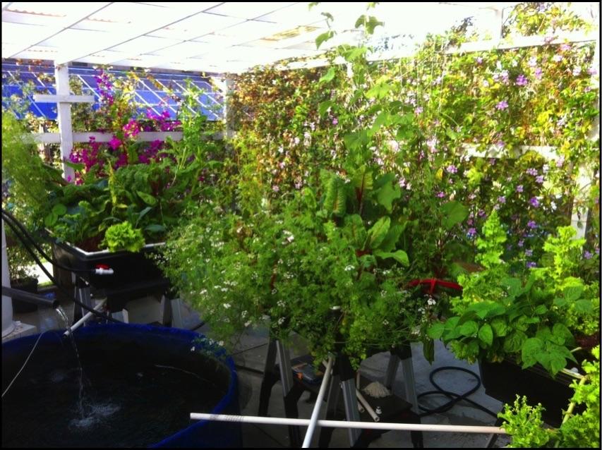 Aquaponics grow beds aquaponics usa for Aquaponics grow bed