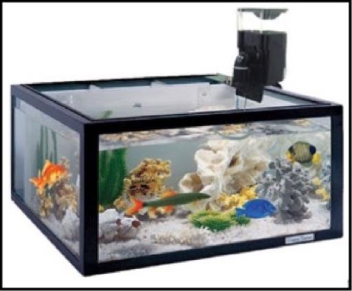 Automatic fish feeders aquaponics usa for Fish tank feeder
